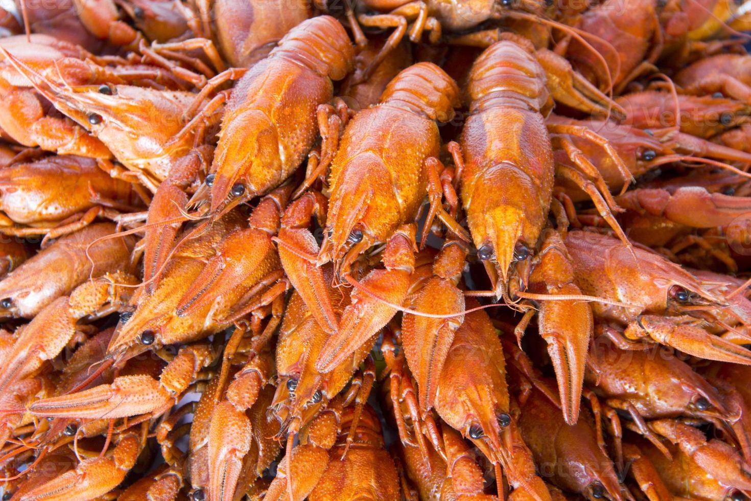 muchos cangrejos foto