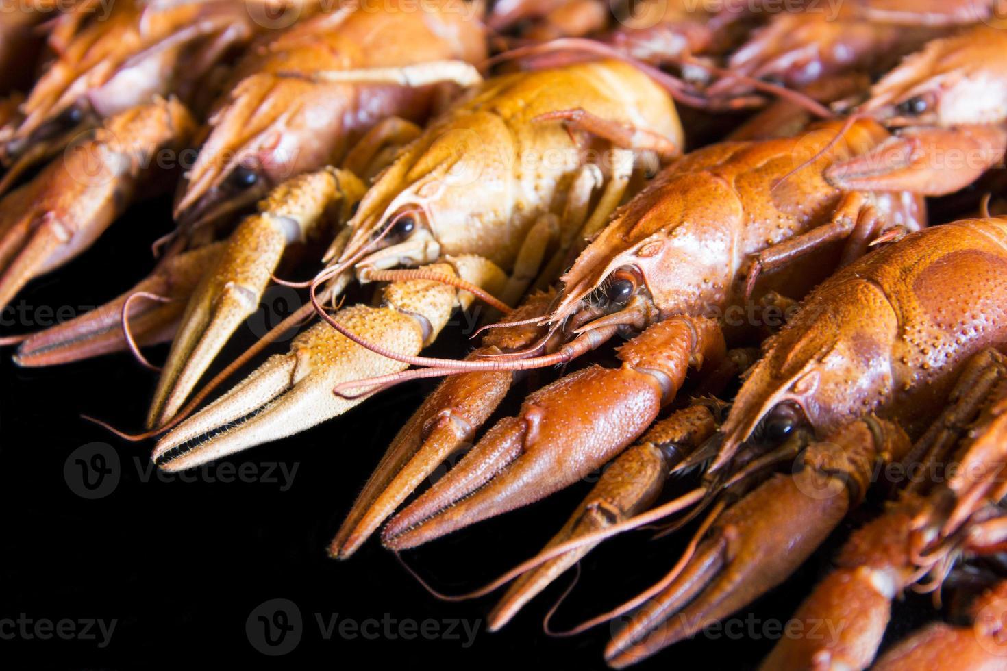 muitos lagostins foto