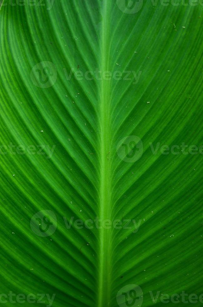 hoja verde foto