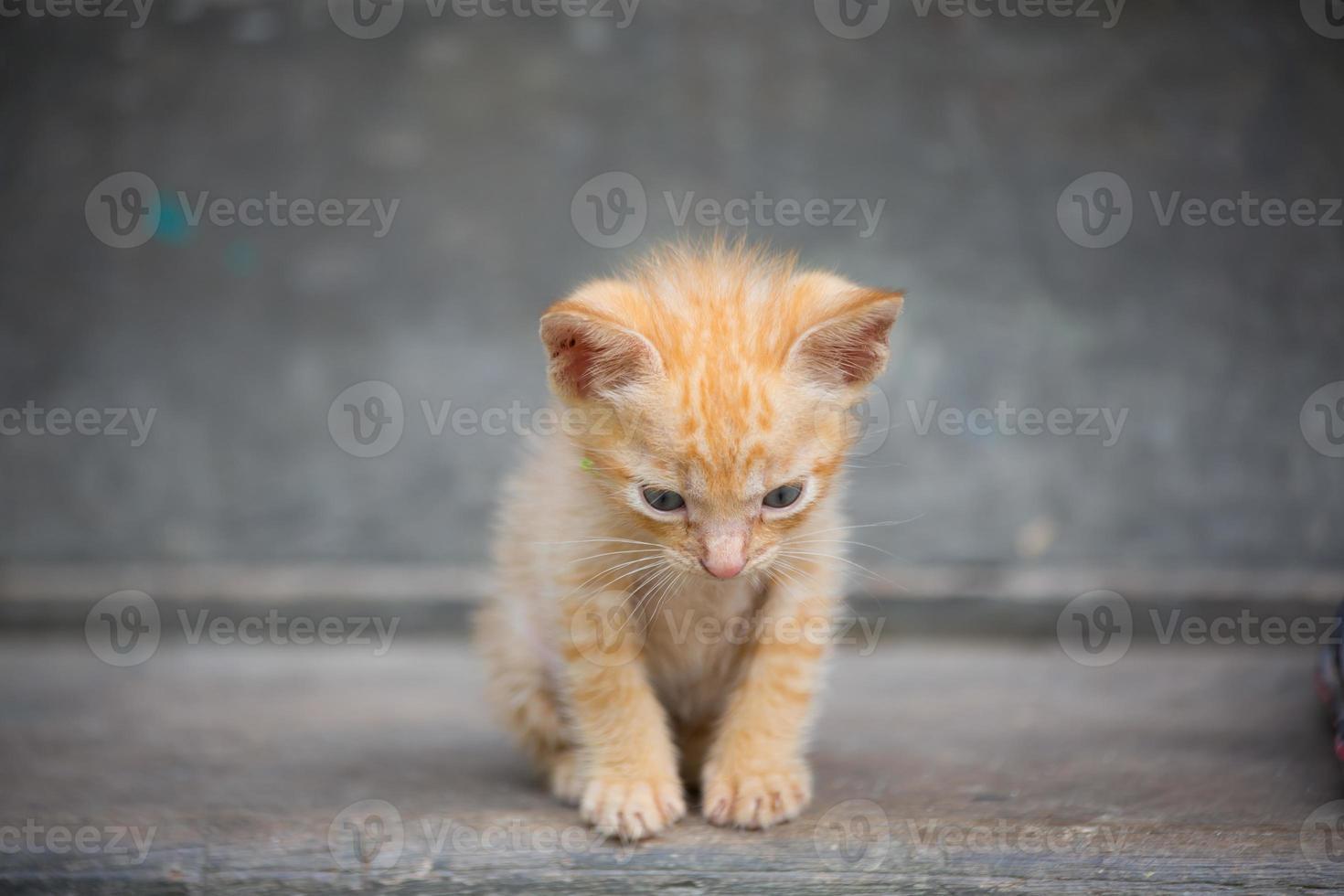Adorable gatito bebé. foto