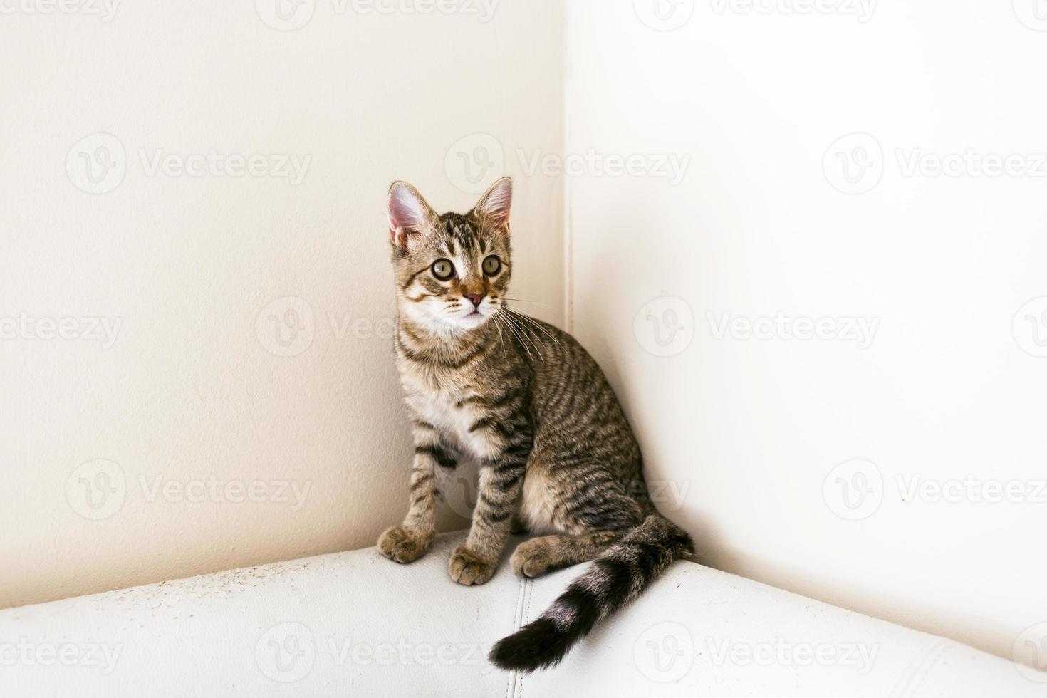 gatito atigrado foto