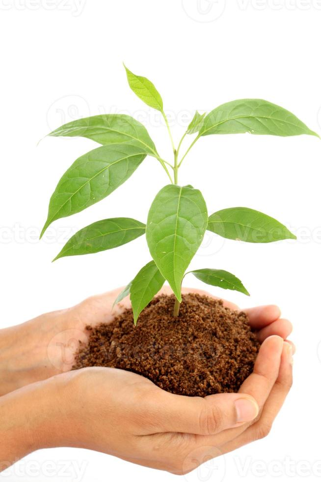 Hand holding  baby plant on white photo