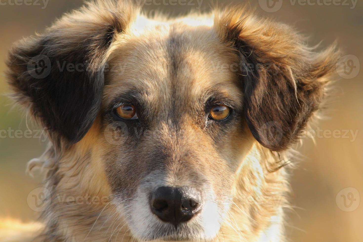 cute dog portrait photo