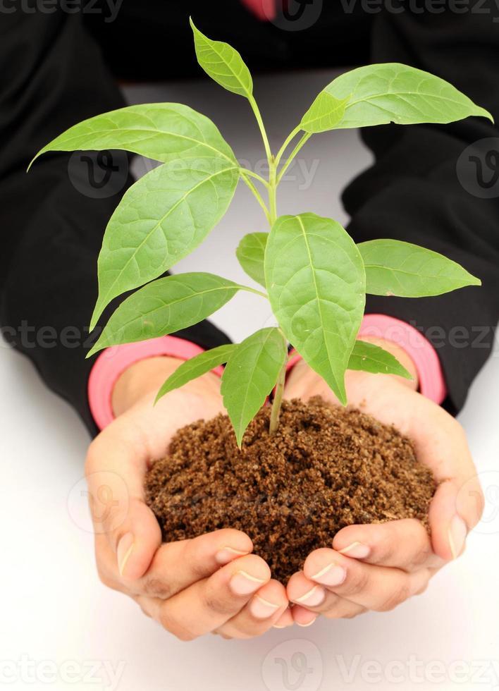 mujer de negocios, tenencia, bebé, planta, blanco foto