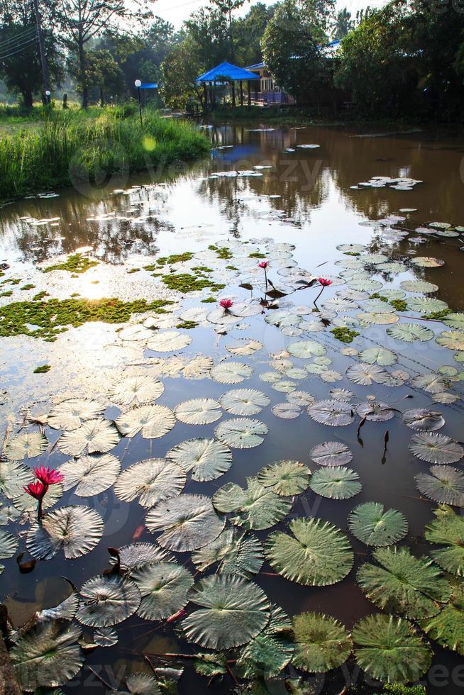 planta acuática. foto