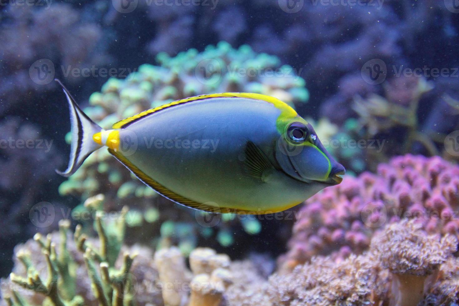 Sea life photo