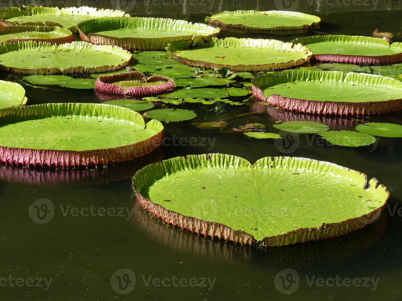 señor seewoosagur ramgoolam jardín botánico foto