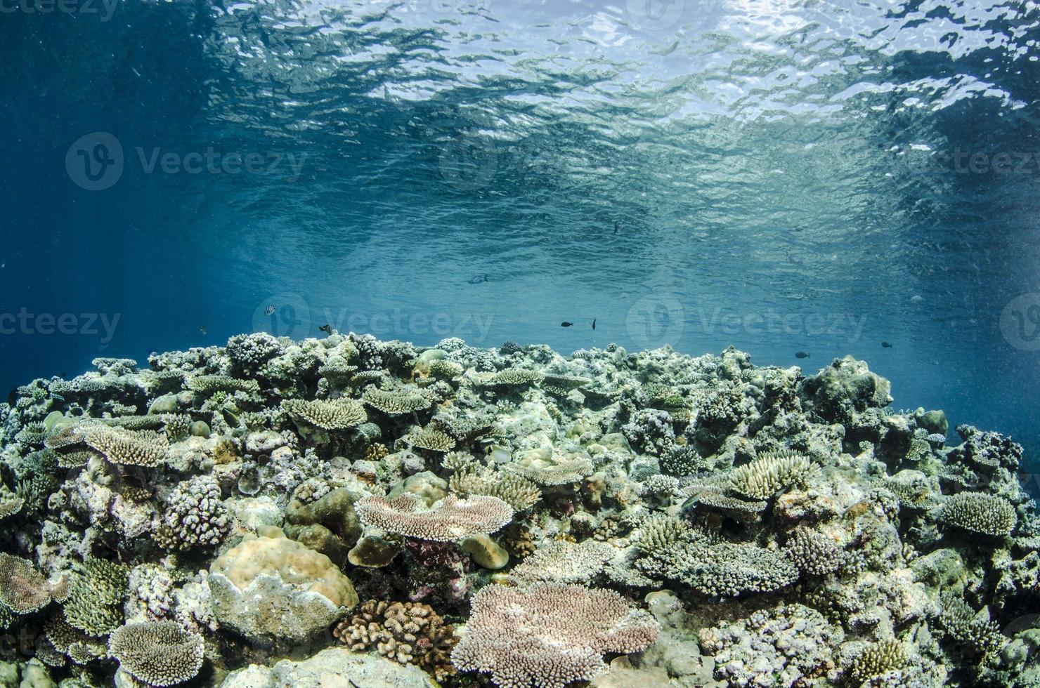 Hard coral reef photo