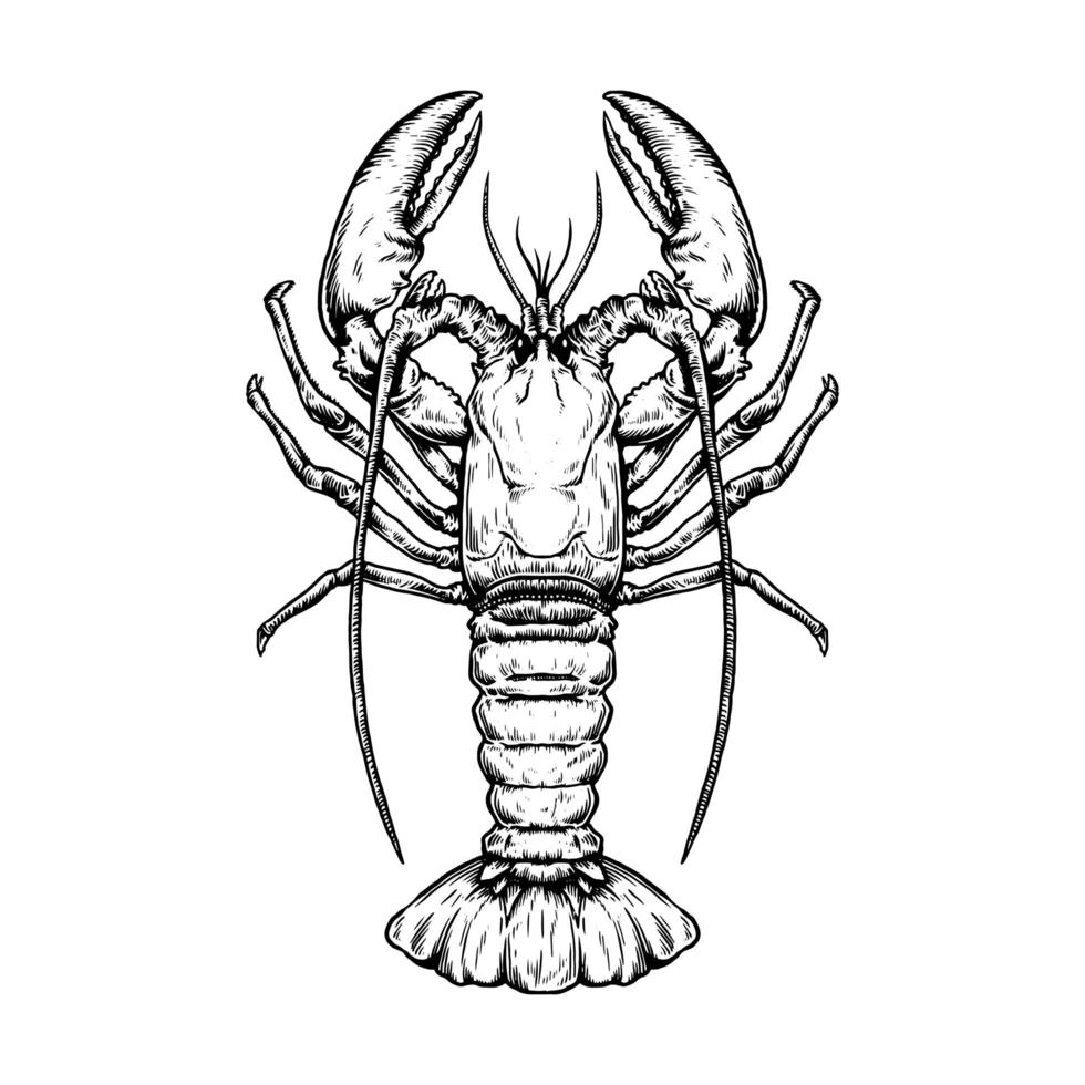 Top down view of vintage hand drawn lobster vector