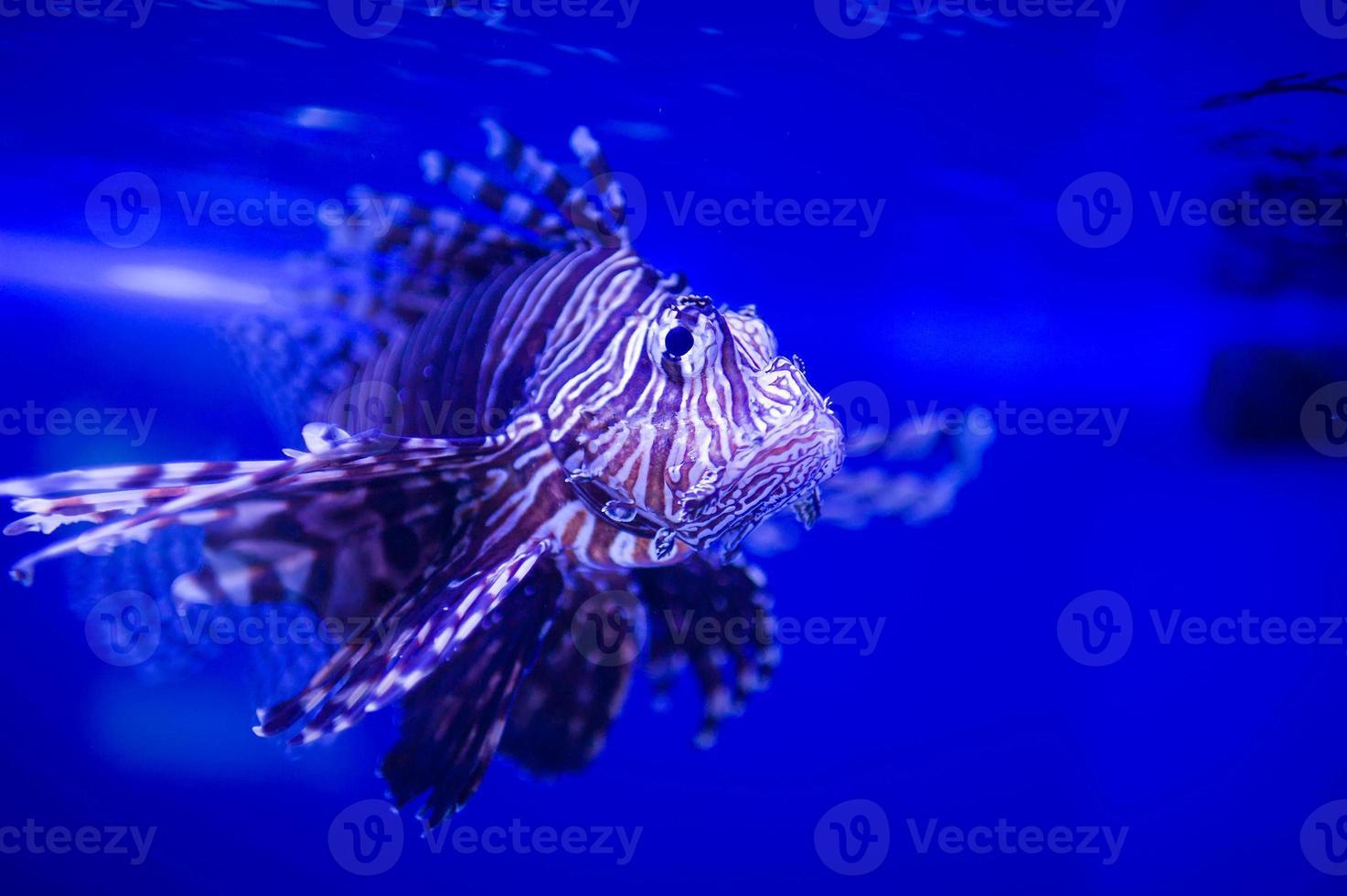 sea fish photo