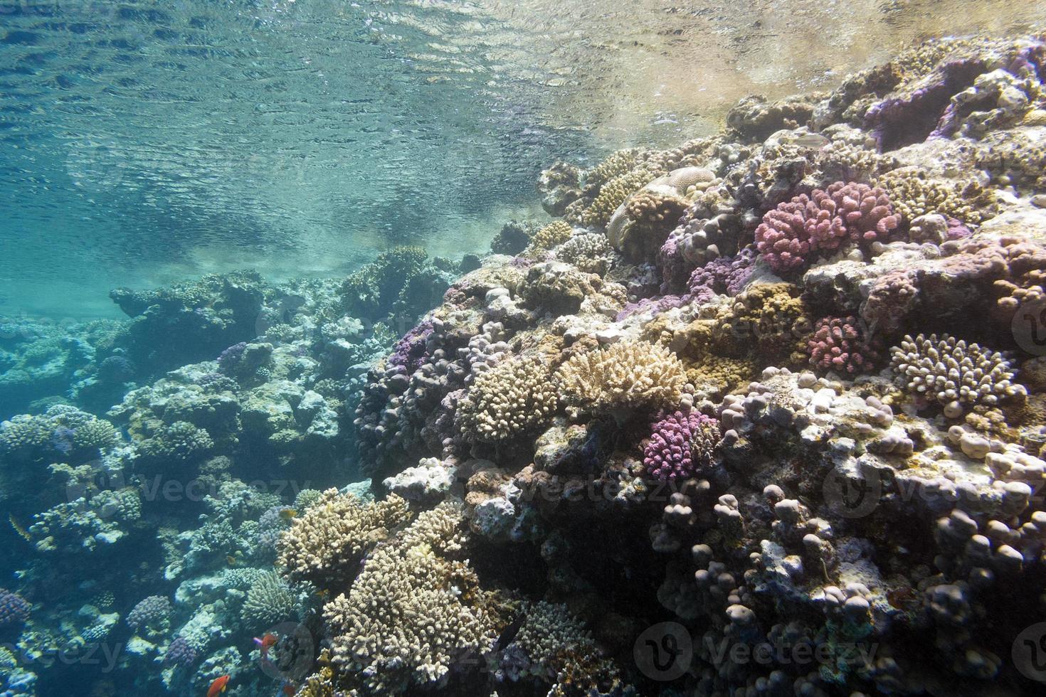 arrecife de coral bajo la superficie del agua en el mar tropical foto