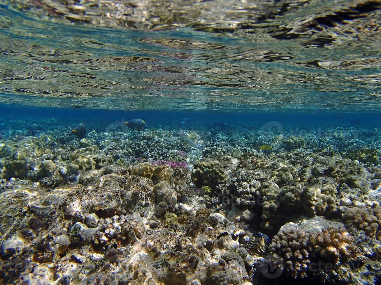 snorkel increíble foto