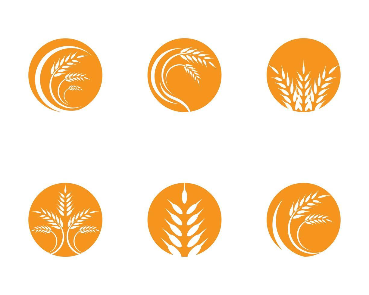 conjunto de logotipo de trigo agricultura vetor