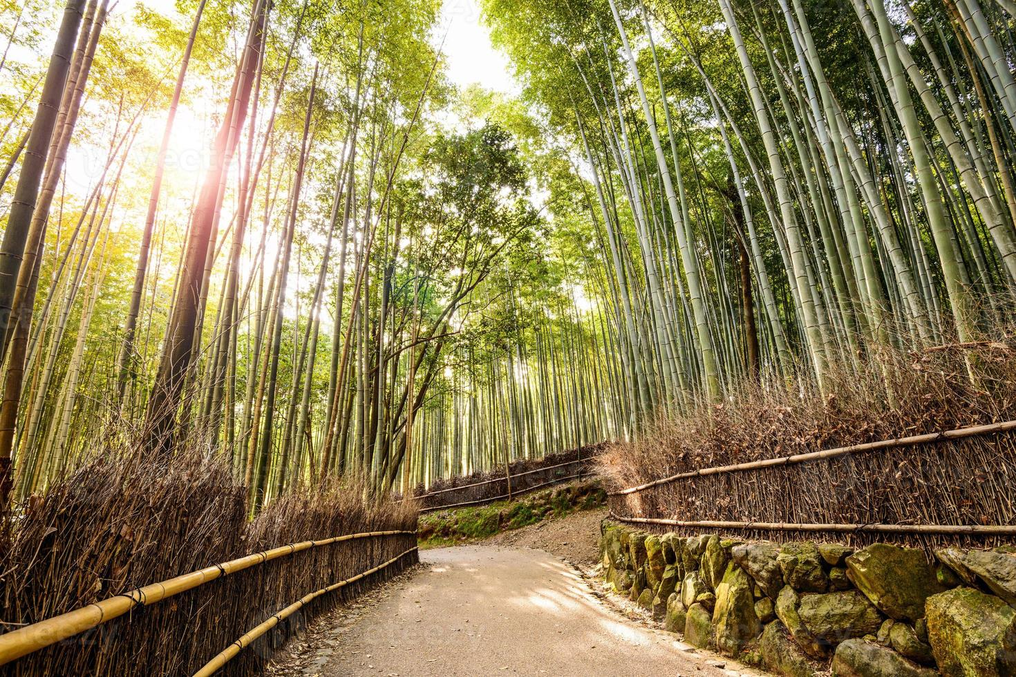bosque de bambú foto