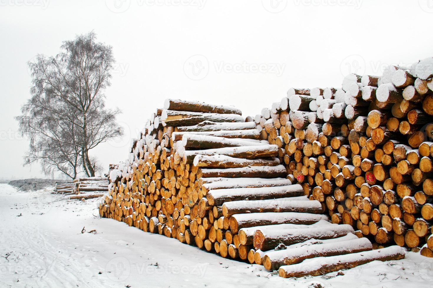 tallos de árboles apilados foto