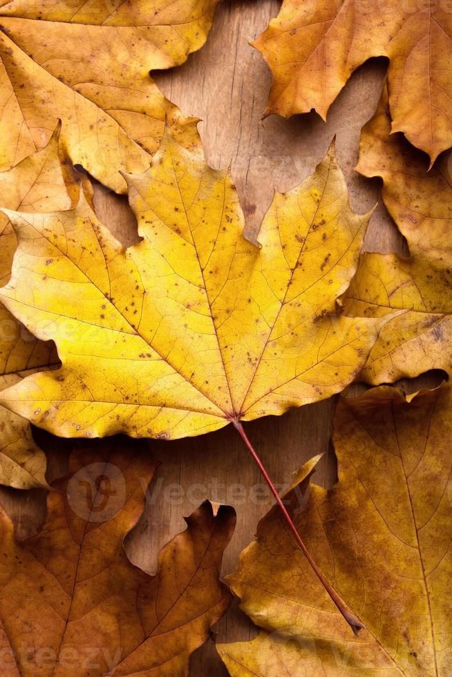 hojas de otoño sobre fondo de madera foto