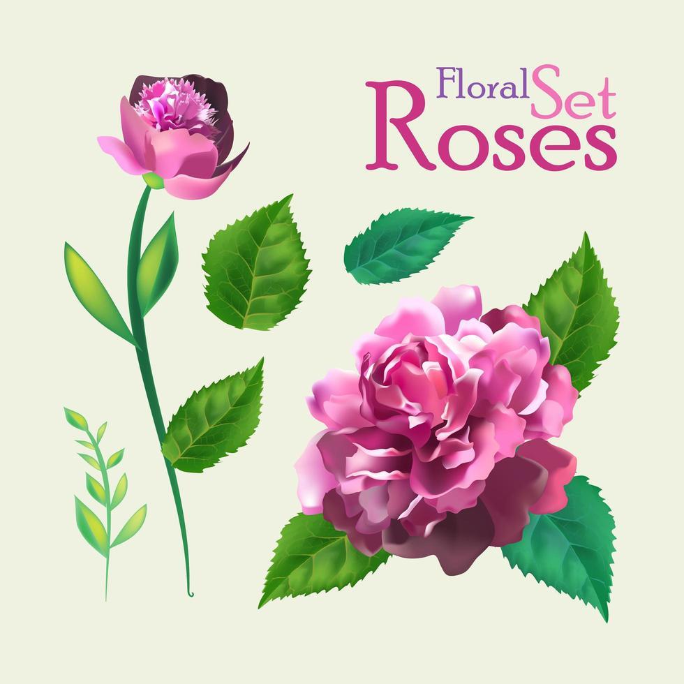 Set of Botanic Rose Flowers.  vector