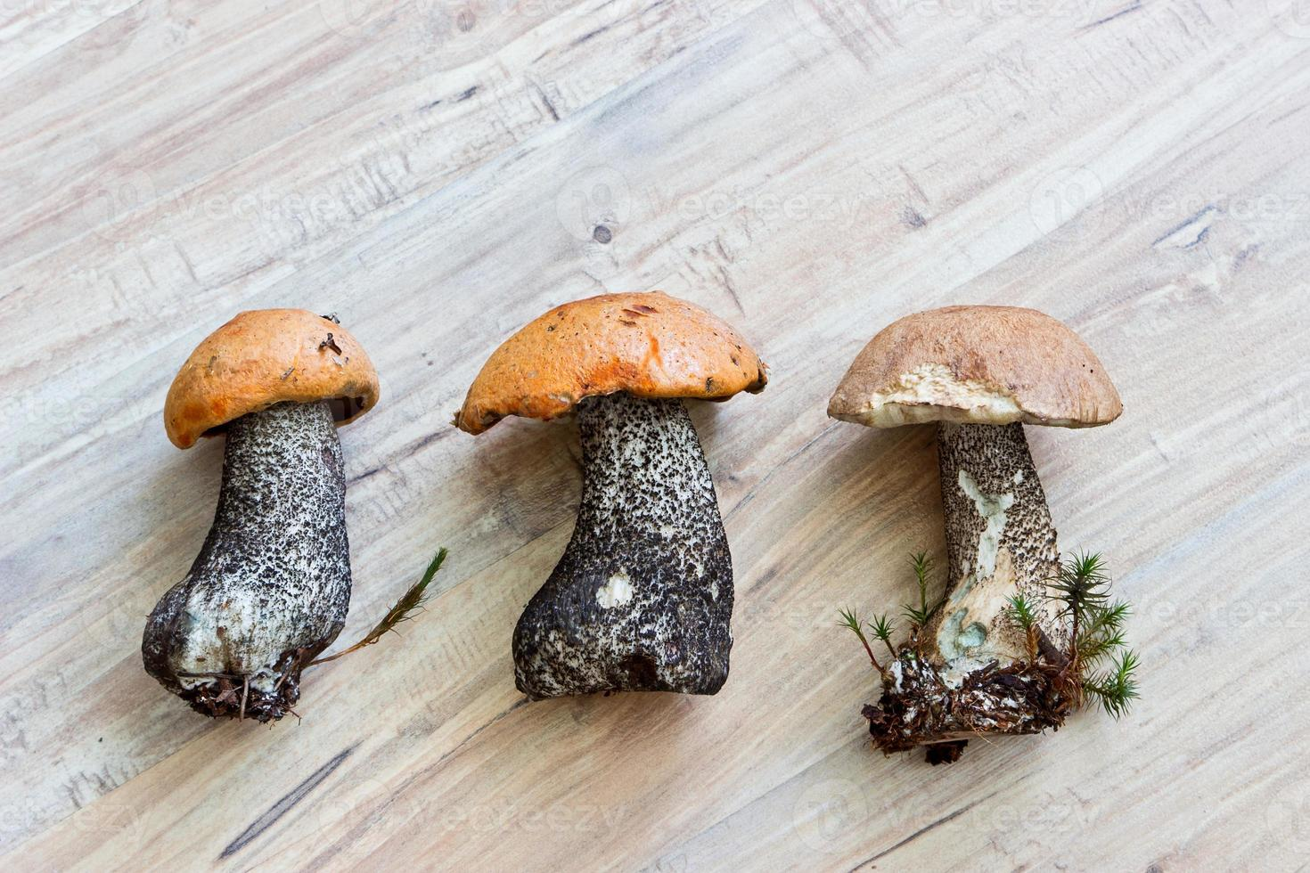 Fresh forest mushrooms on wooden background photo