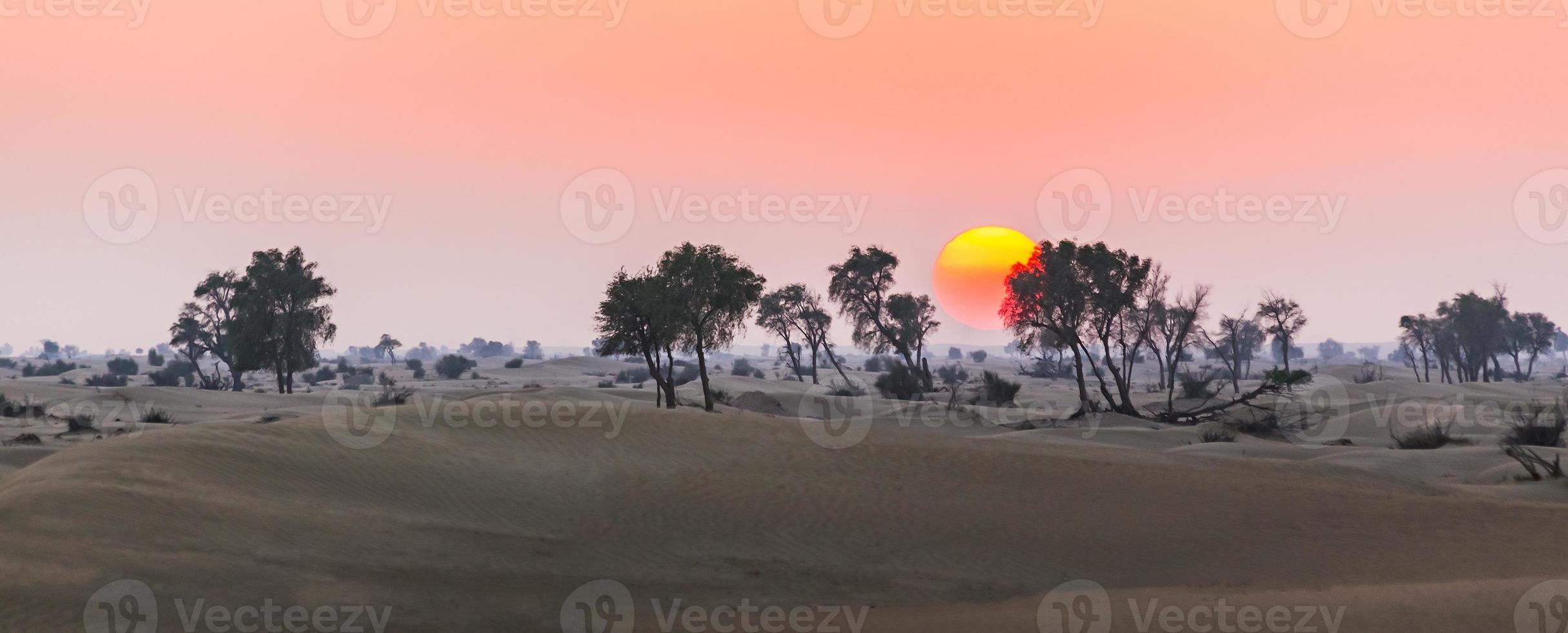 Arabian desert photo
