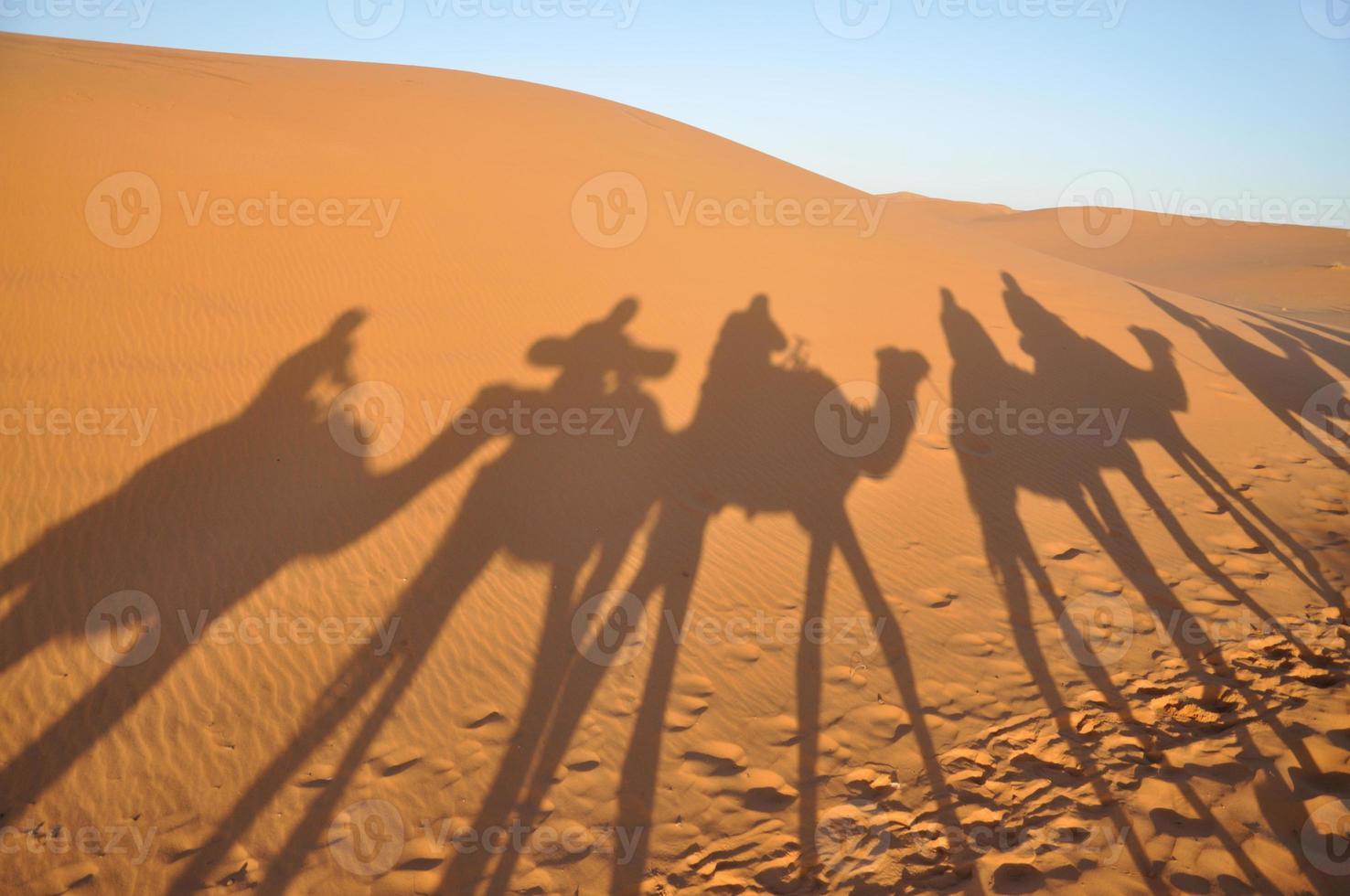 sombras de camellos en el desierto del sahara foto