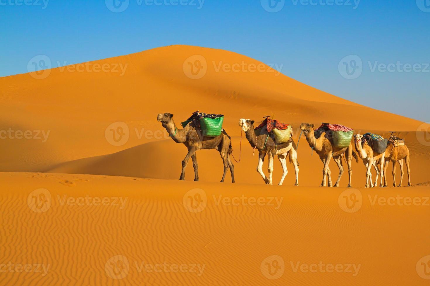 woestijn caravan foto