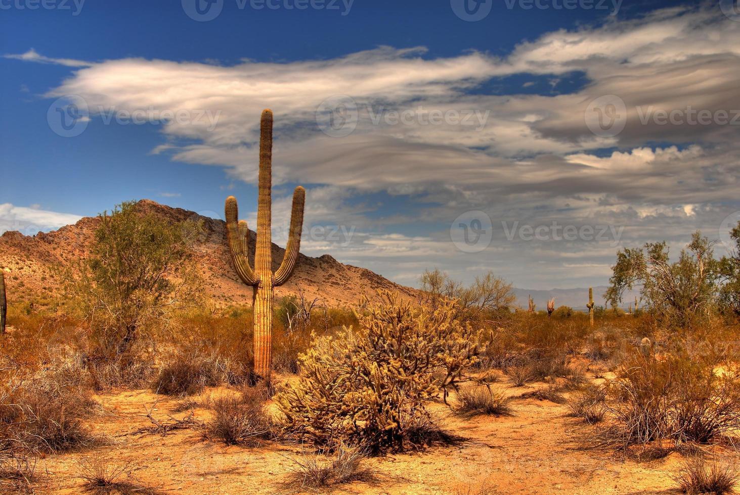 montaña del desierto foto