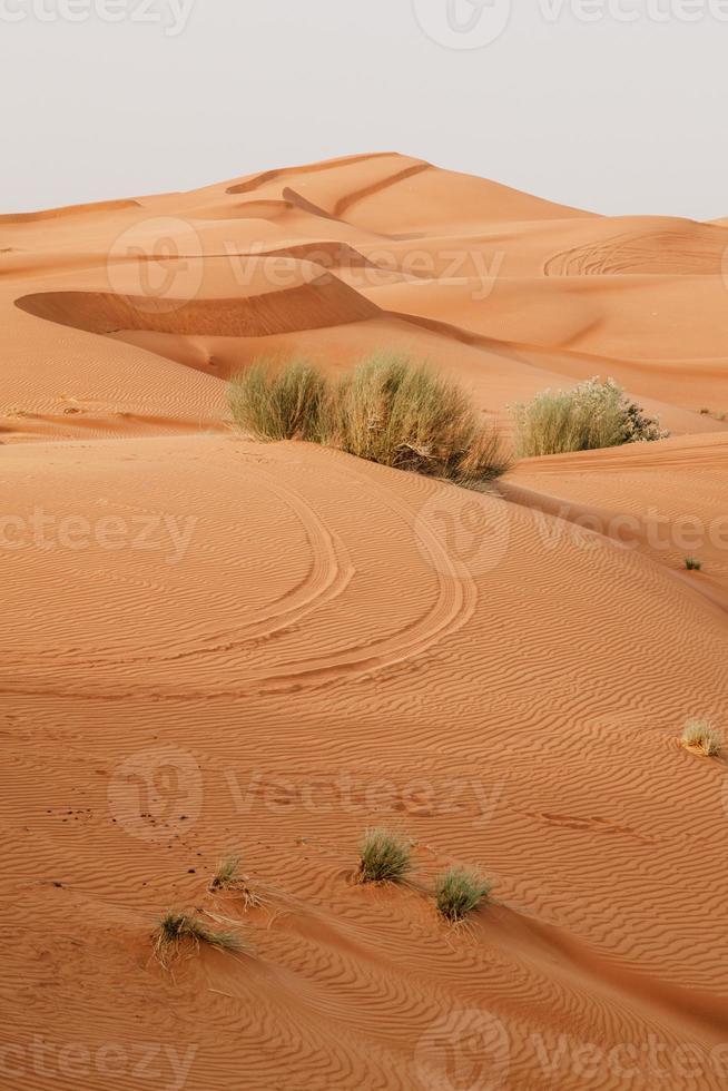 desierto arábigo foto