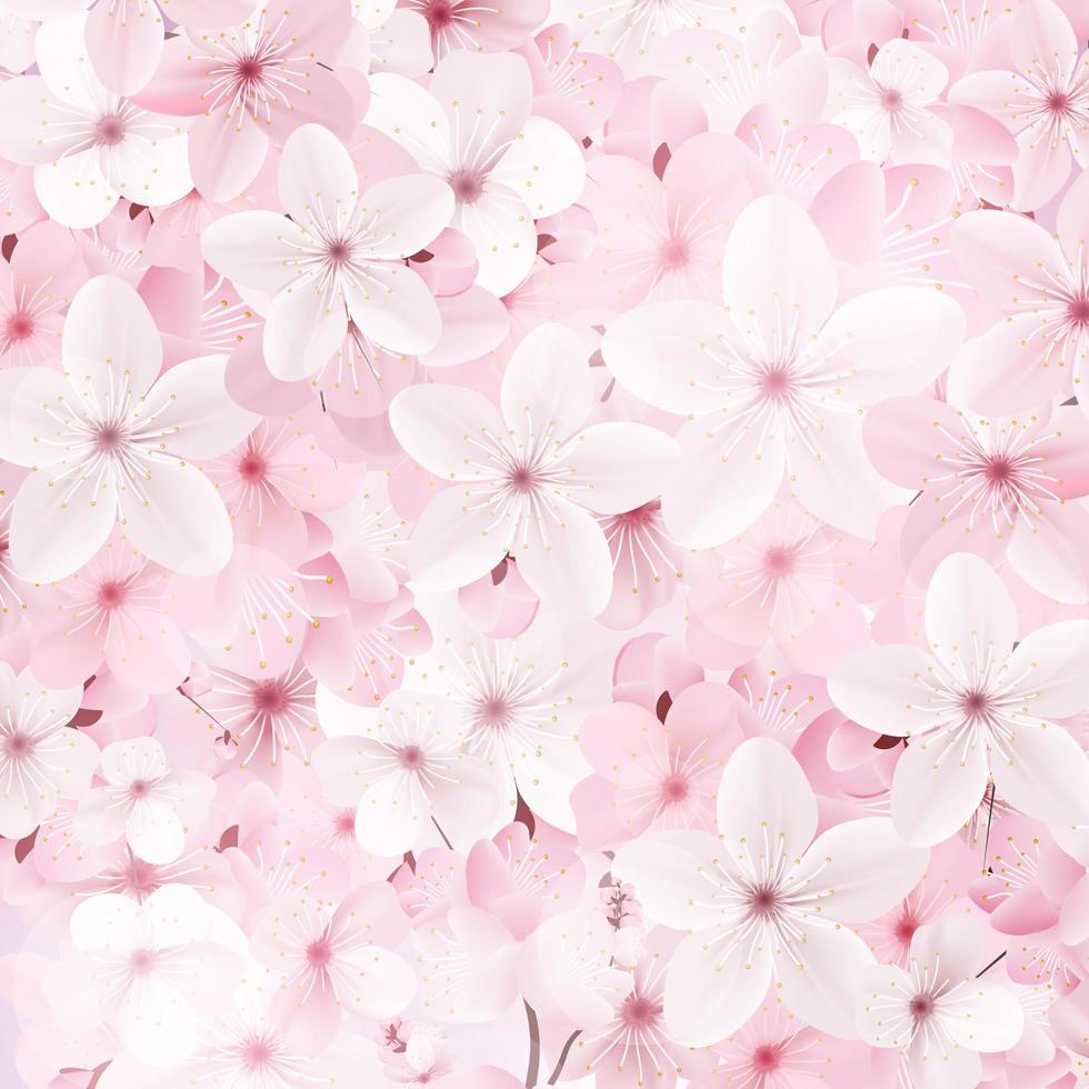 Blossoming pink sakura flowers background. vector