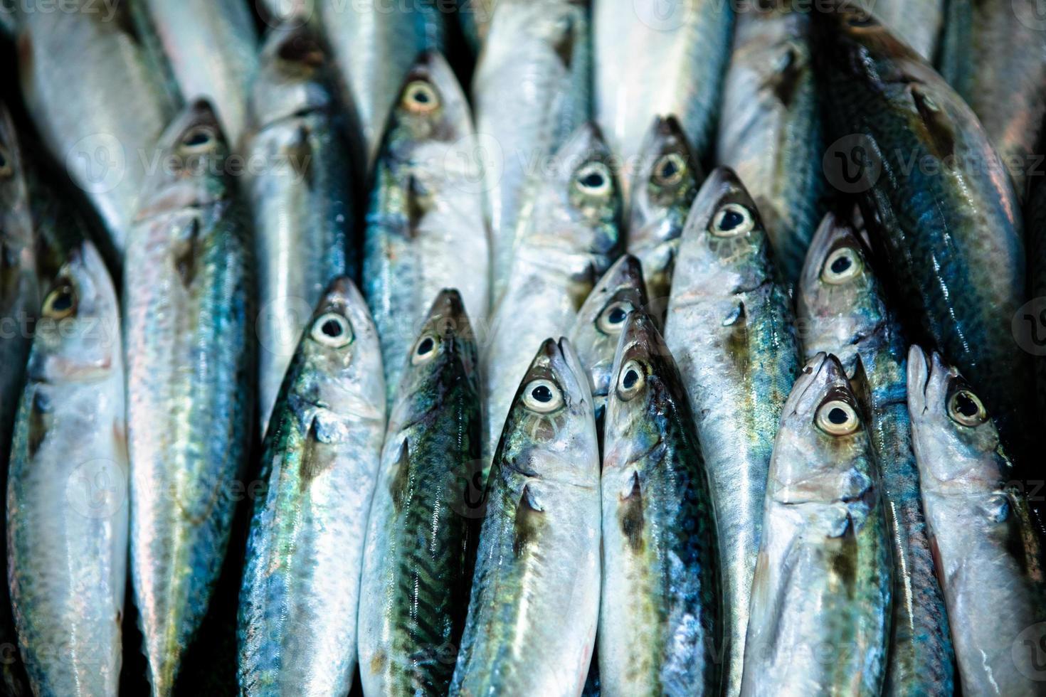 Montón de pescado para la venta en el mercado foto