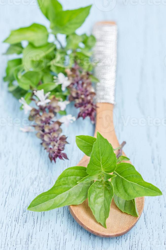 Fresh Sweet Basil leaf on wooden spoon photo