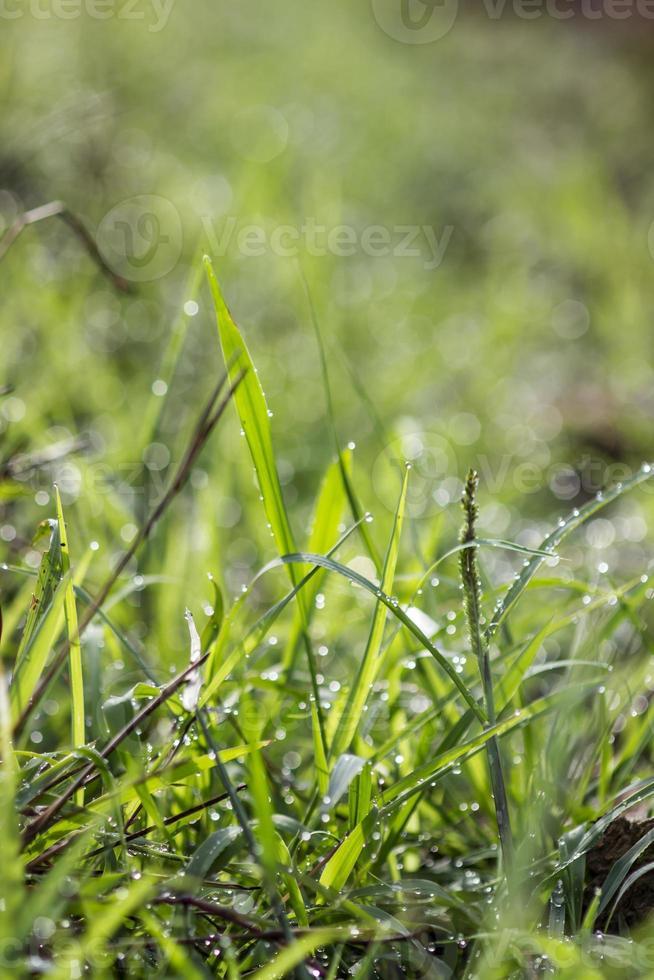 una imagen de hierba con gotas de lluvia foto
