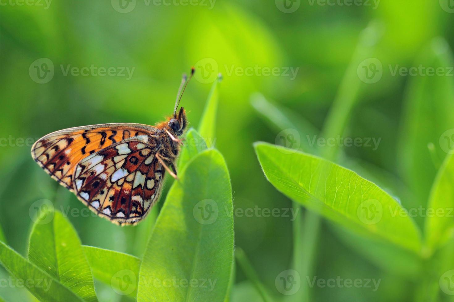mariposa en las hojas verdes foto