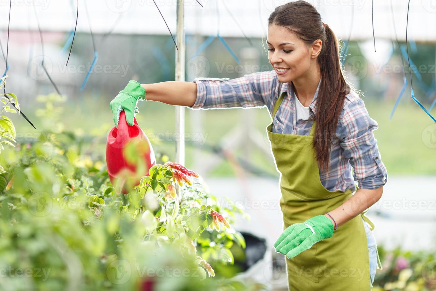Florist watering plants in her greenhouse. photo