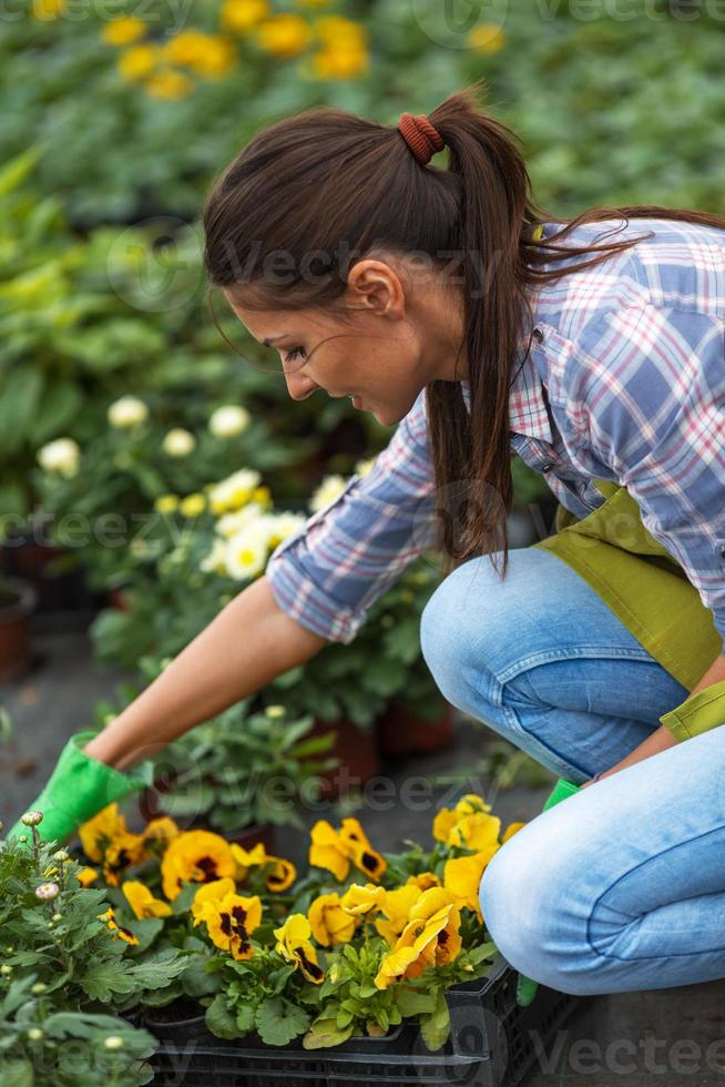 Young woman gardening in greenhouse. photo