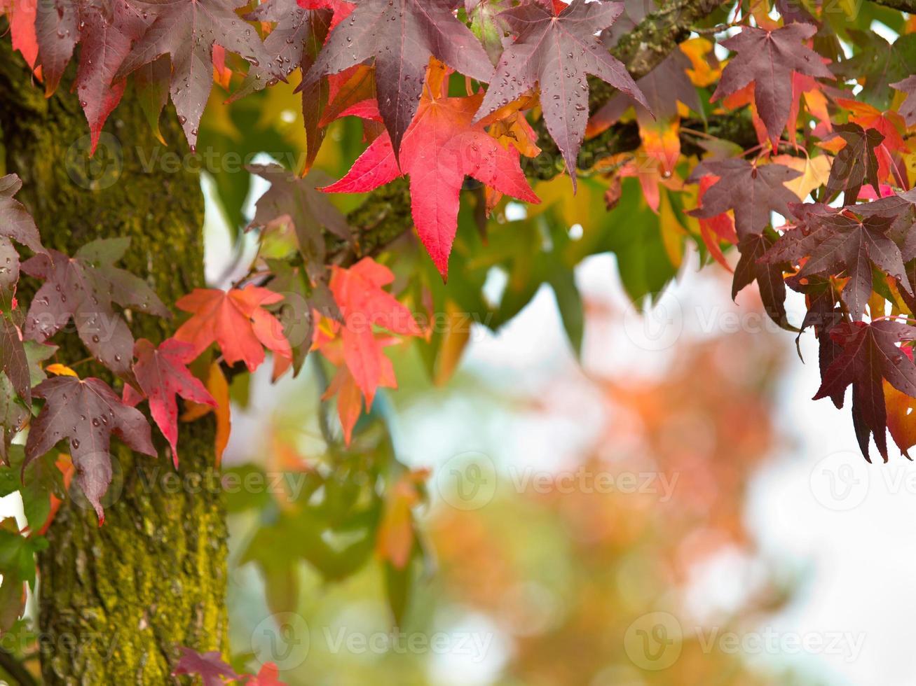 concepto de otoño foto