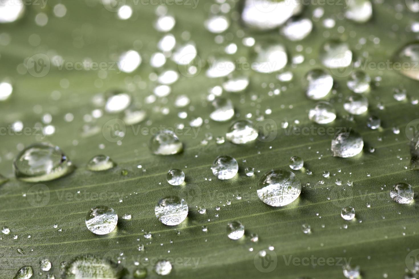 An image of grass with rain drops photo
