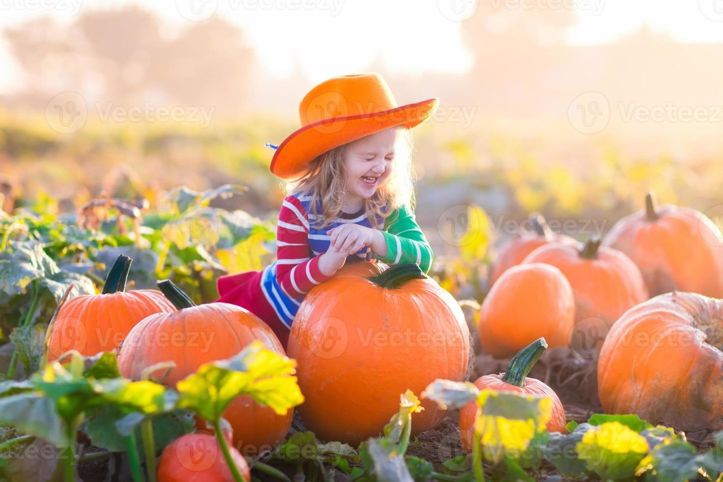 Child playing on pumpkin patch photo