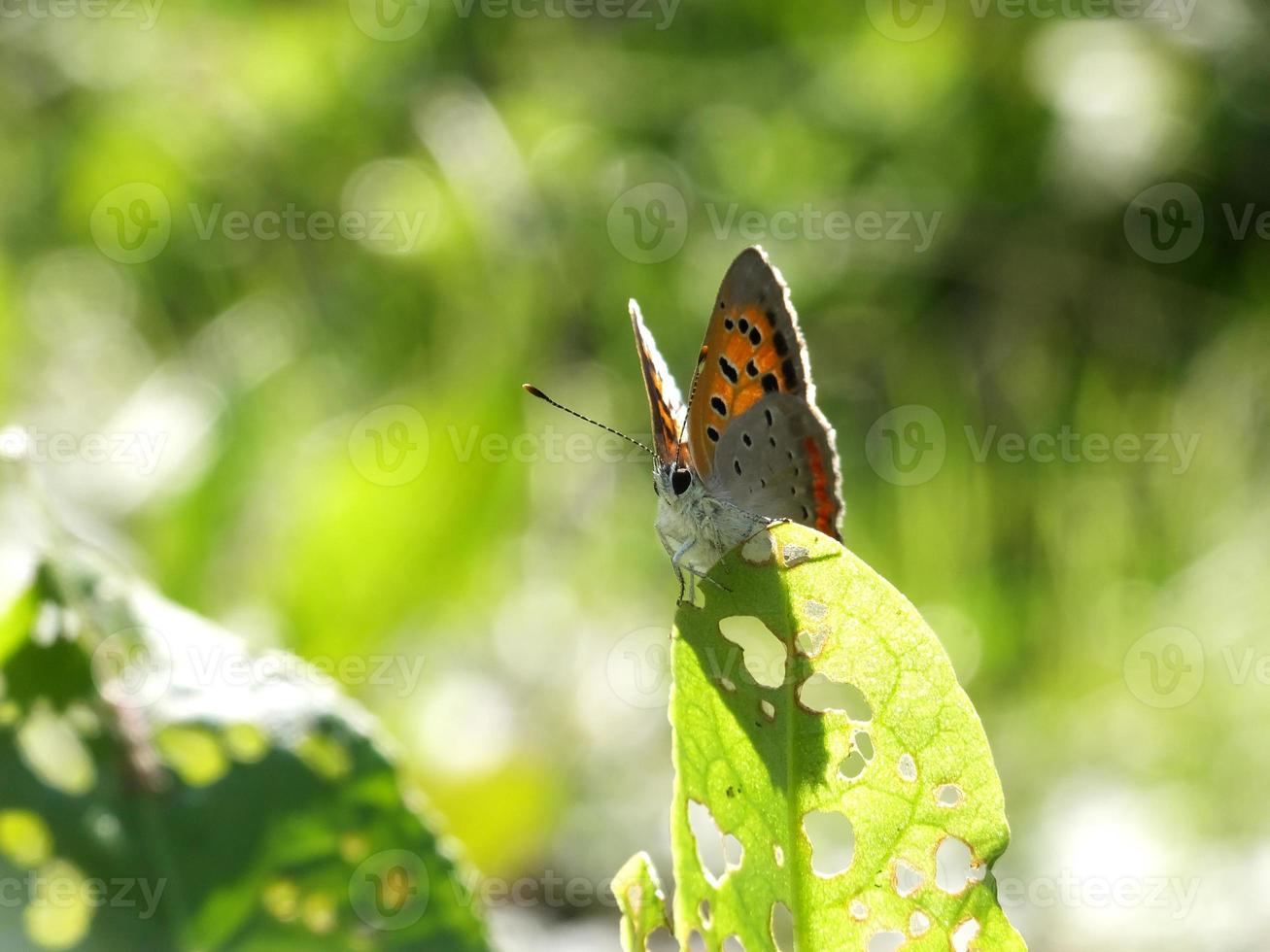 shiny butterfly in the field #5 photo