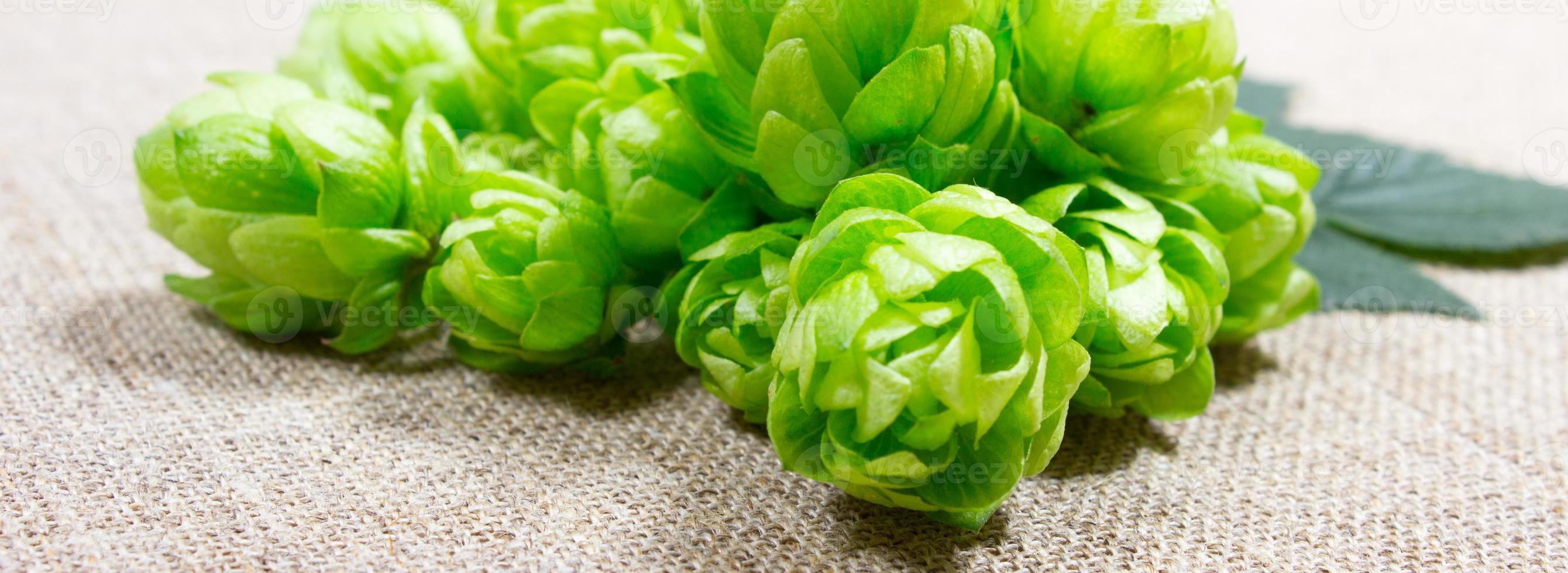 Fresh hops - closeup photo