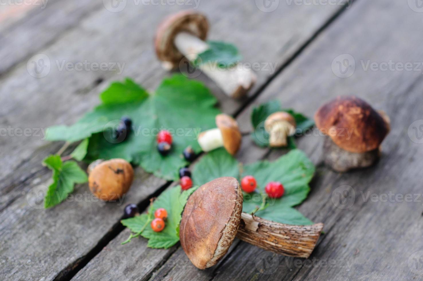 setas del bosque comestibles recogidas foto