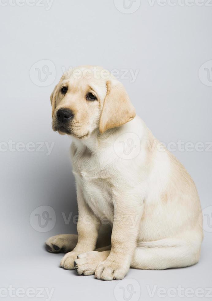 cachorro triste foto