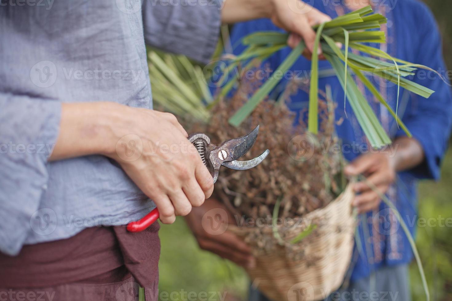 Couple harvesting herbs photo