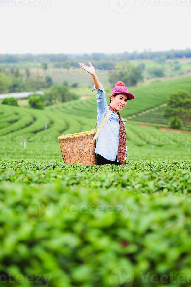 Asia hermosa mujer recogiendo hojas de té en plantaciones, concepto de estilo de vida foto