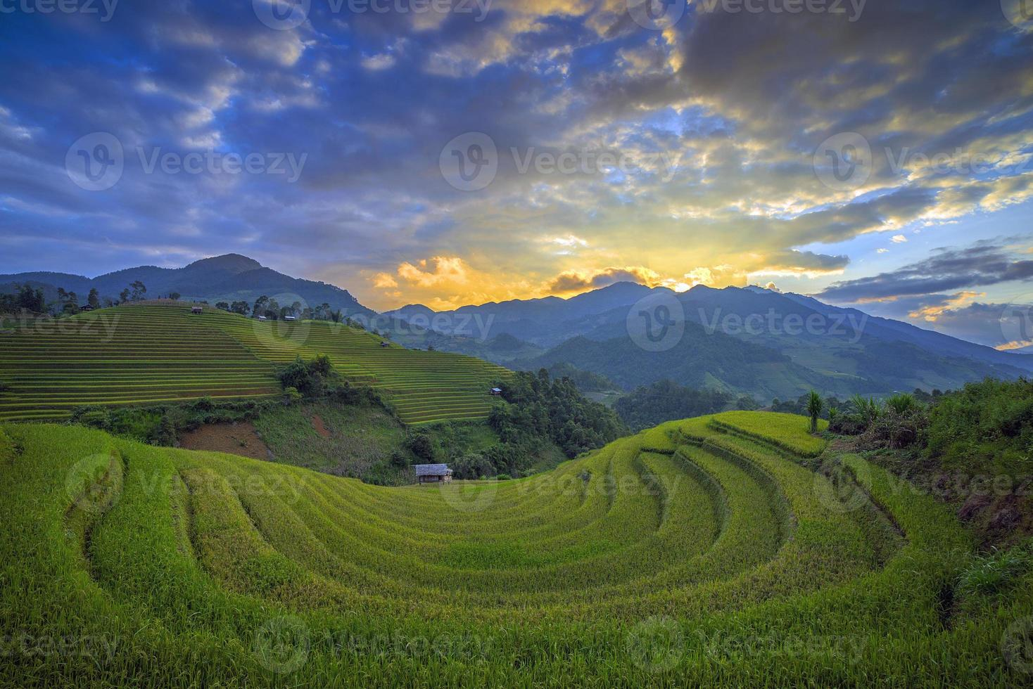 Rice terrace in Vietnam photo