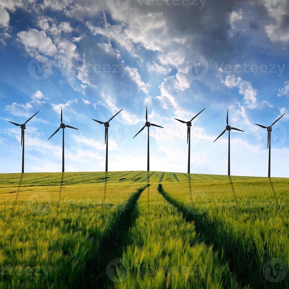 wheat fields with wind turbines photo
