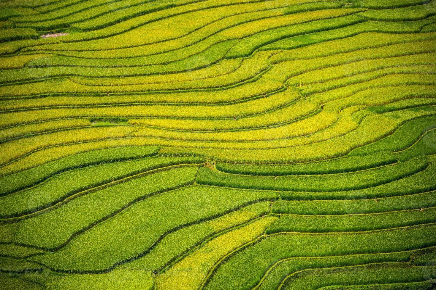 terraza de arroz en vietnam foto
