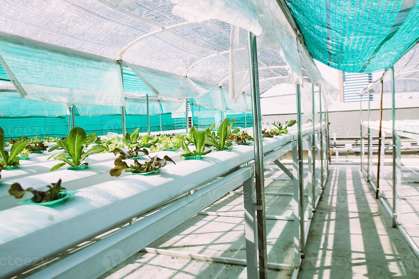 granja hidropónica vegetal verde. foto