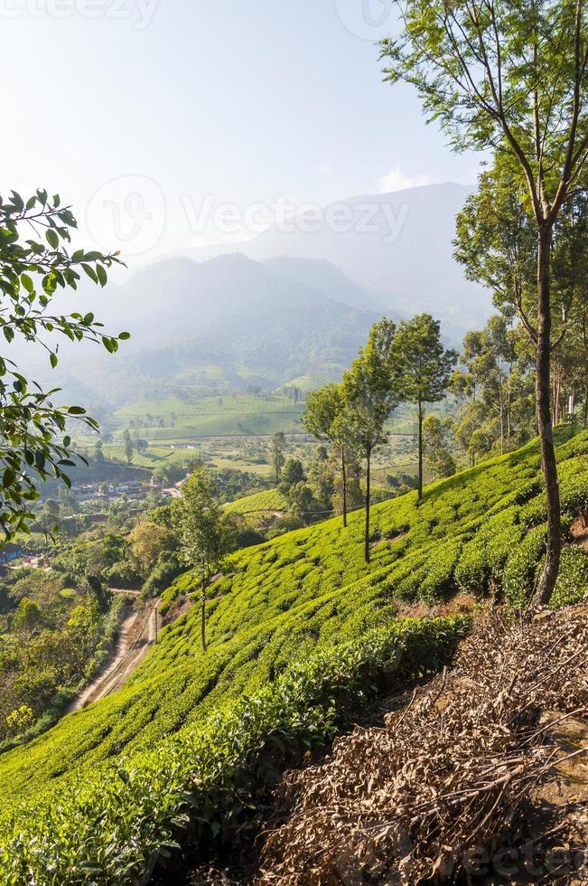 Tea plantations in Munnar mountains photo