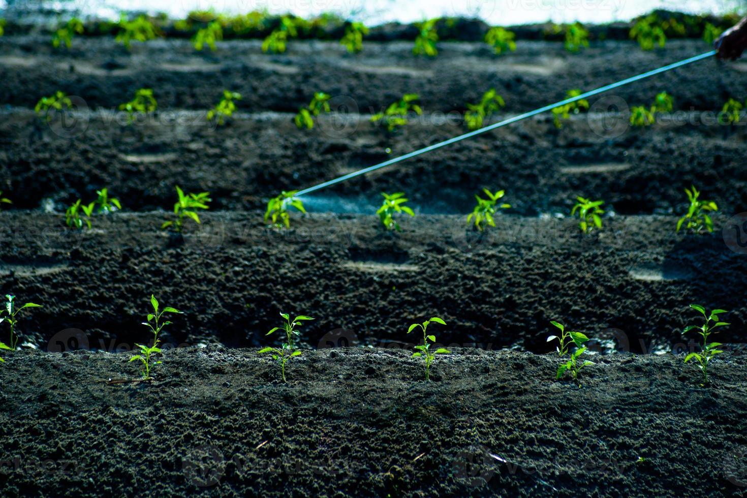 pulverización de insecticidas foto