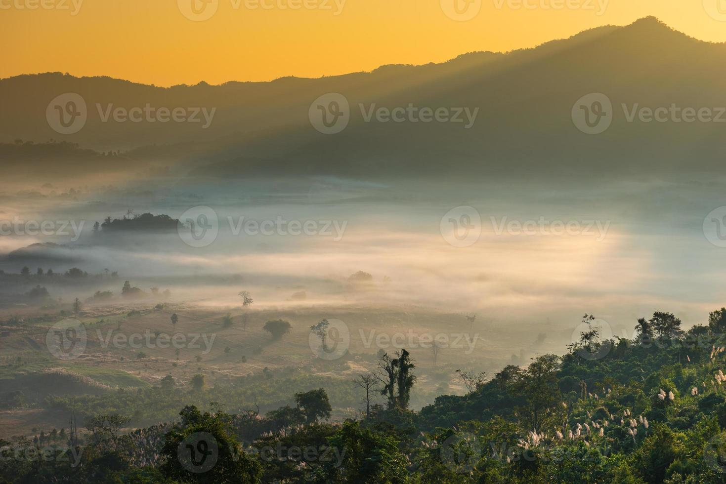 Beautiful landscape and mist covering on field in morning. photo